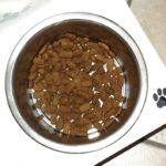 Qualitatives Trockenfutter für Ihren Hund
