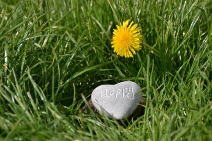 Frisches Gras dank Grassamen